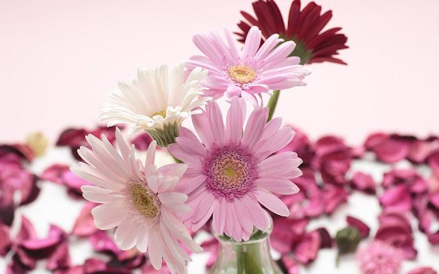 Foto met roze en witte bloemen in een vaas