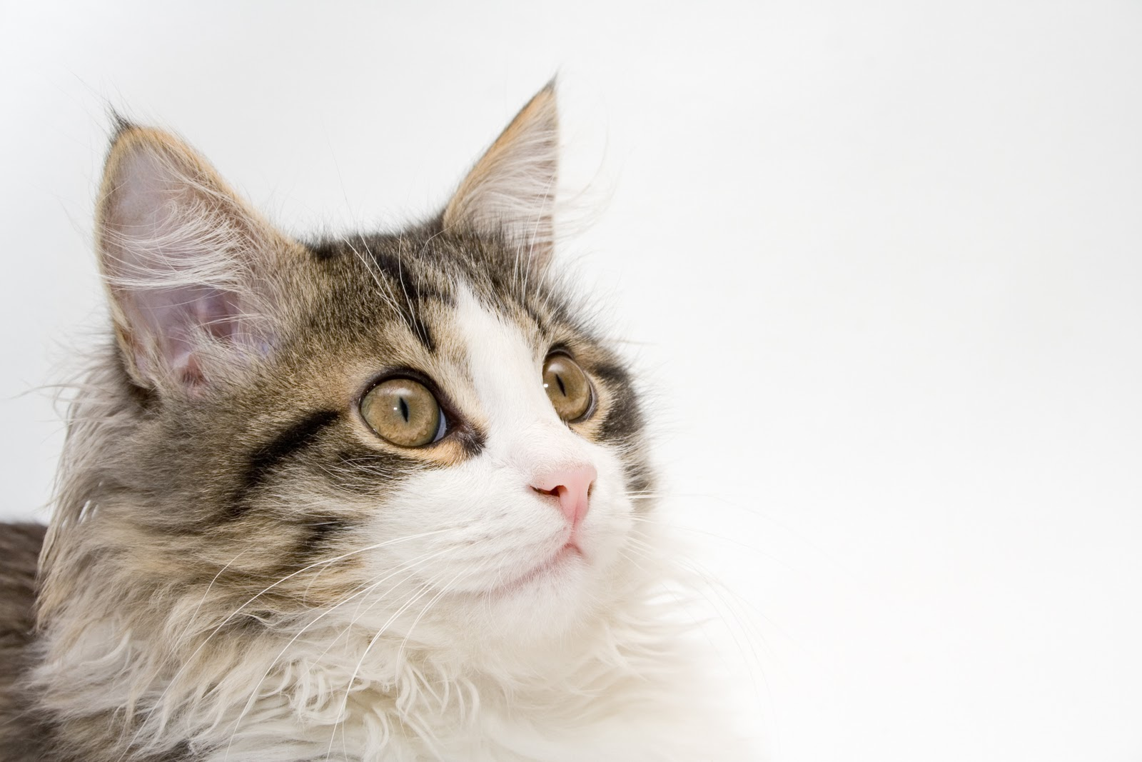 Best Way To Give Oral Medication To Cats