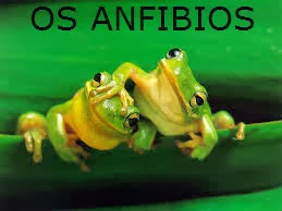 http://cplosangeles.juntaextremadura.net/web/edilim/curso_3/cmedio/animales_vertebrados_3/anfibios/anfibios.html