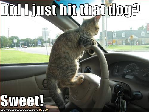 Funny Cats And Dogs With Words Funny Cats And Dogs Picture
