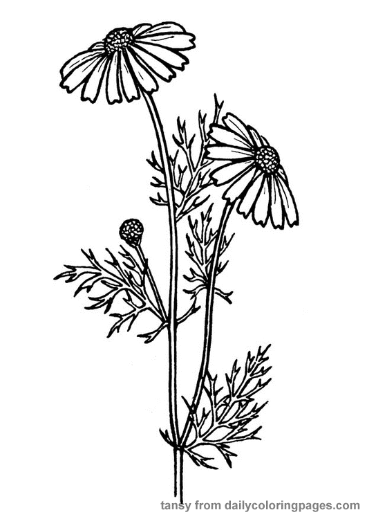realistic flower coloring pages - realistic flower coloring pages flower coloring page