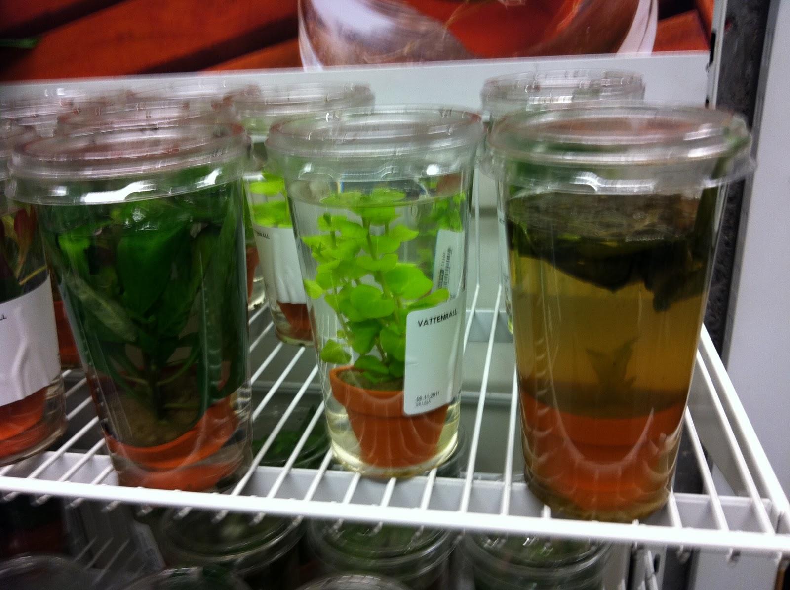 Schpl fail for Wasserpflanzen ikea
