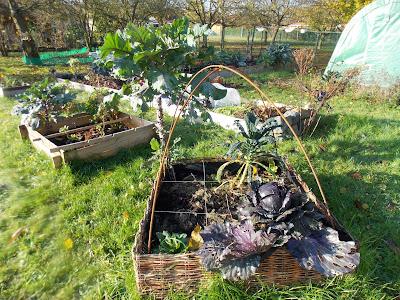 En décembre, il y a encore de la nourriture au jardin
