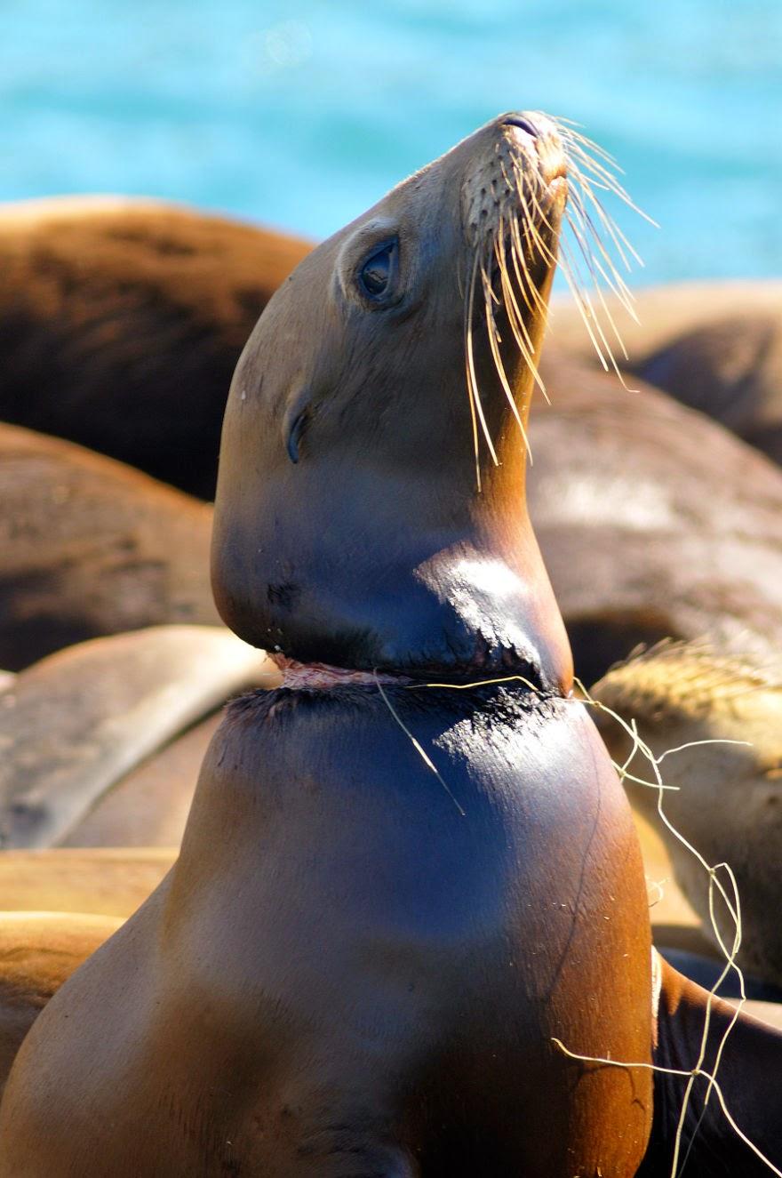 10 Gambar Kesan Pencemaran Alam Terhadap Haiwan Ini Akan Buat Anda Tersentak