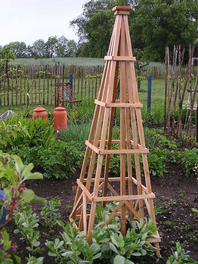 lærketræ i haven