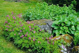 Trädgårdsåret 2012 Del I