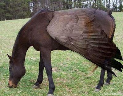 funny_picture_funny_horse_vandanasanju.blogspot.com