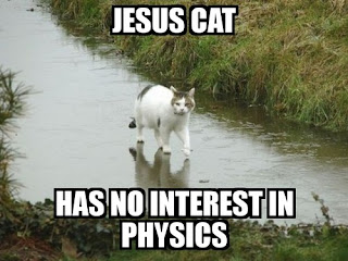 jesus cat lolcats has no interest in physics, lolcats, jesus cat, cat walking on water, funny cats, funny animals, jesus