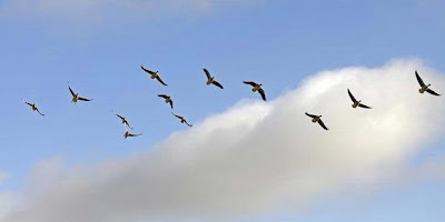 burung migrasi