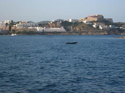 Dalt Vila in Ibiza