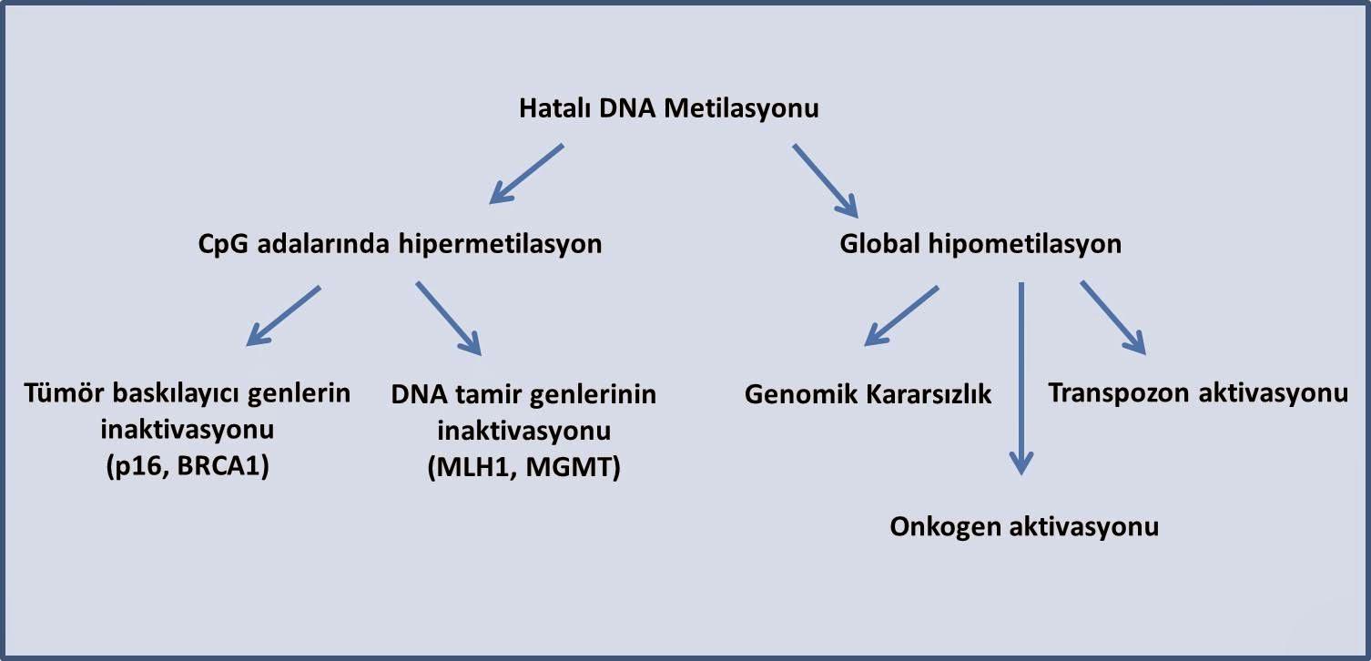 DNA metilasyonunun kanserle ilişkili sonuçları