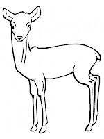 Antelope Printable Kids Coloring Pages Free