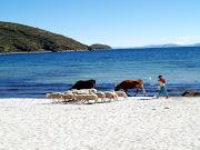 . caribe, sino que es un pequeño paraíso en el centro del continente . (chola playa)