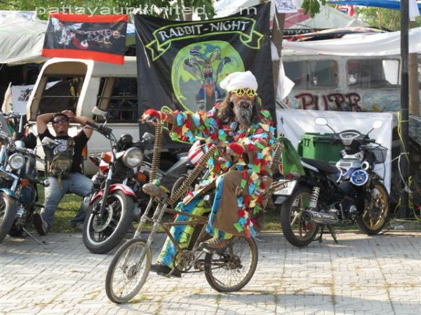 a colorful character riding a bicycle at the pattaya bike week