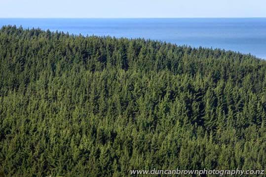 Treetops photograph