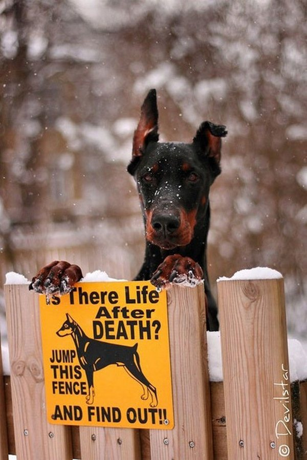 Life After Death, funny dog warning sign