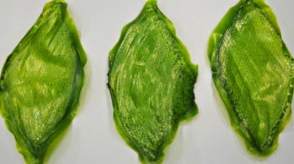 Frunze sintetice care produc oxigen