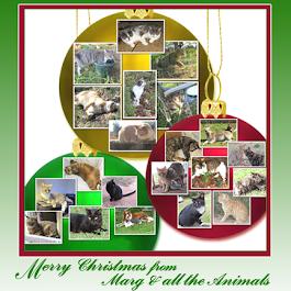 Merry Christmas Marg and Animals!