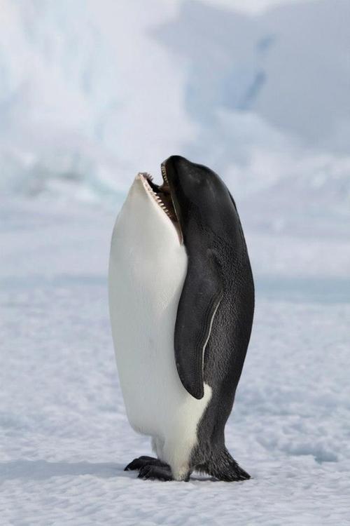 10-Killer-Penguin-Gyyp-Reddit-Animal-Mashups
