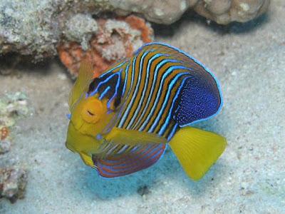 animales-raros-peces-raros-oceanografic