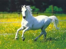 Arti Mimpi Kuda