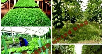 kekurangan dan kelebihan pertanian organik untuk saat ...