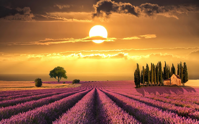 Tuscany Wonderful Sunset Over Lavender Fields Italy HD Desktop Wallpaper