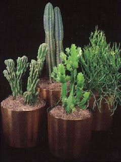 Cactus plant picture