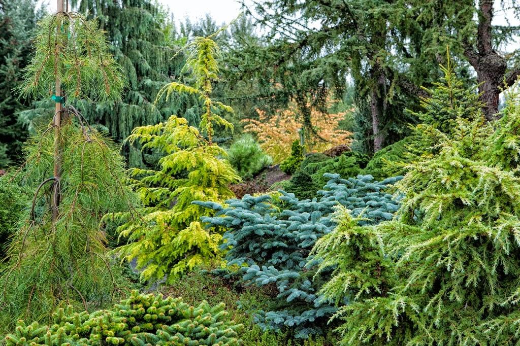 The Garden Conifer Gardens