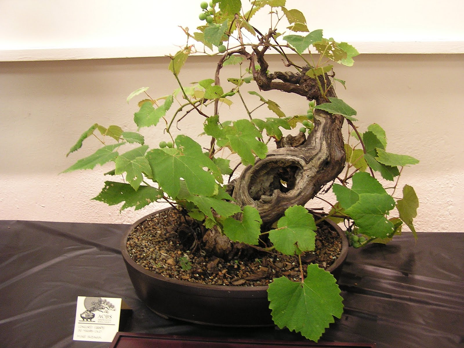 Akron Canton Bonsai Society July 2011