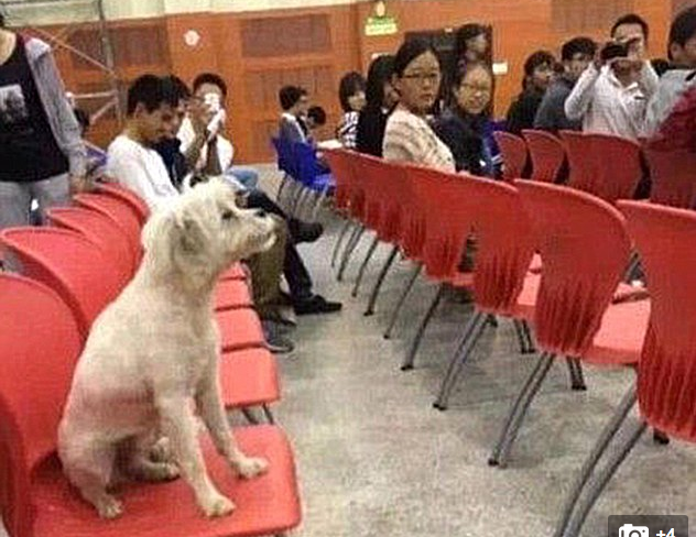Chinese Students Furious as Stray Dog Got Killed by University