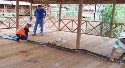 ular besar