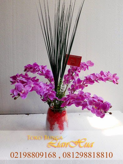 bunga anggrek bulan ungu