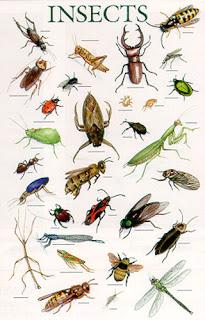 Kosakata Bahasa Inggris Serangga