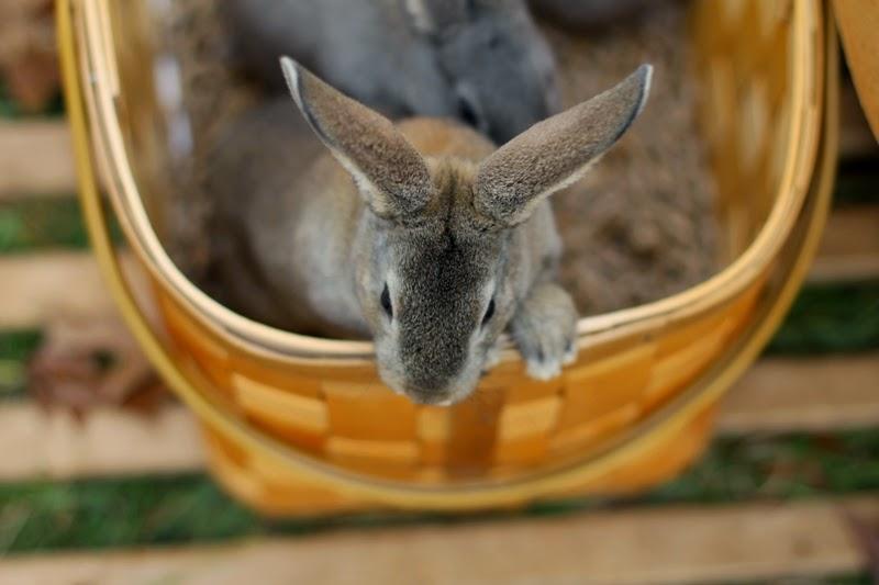 Molasses peeks over the basket