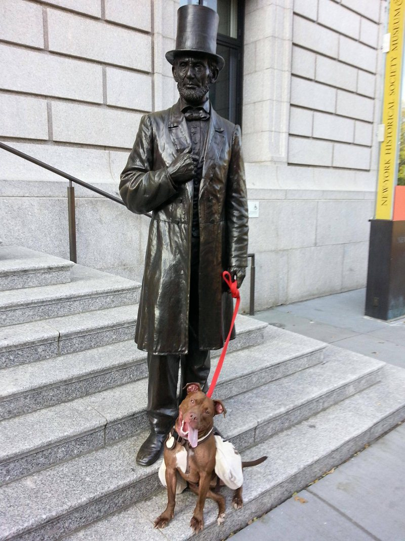 funny animal pics, animal photos, dog and Abraham Lincoln statue