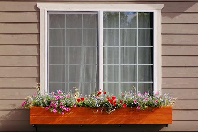 النصائح للزراعة المنزلية محدود DSC_8859-769866.jpg