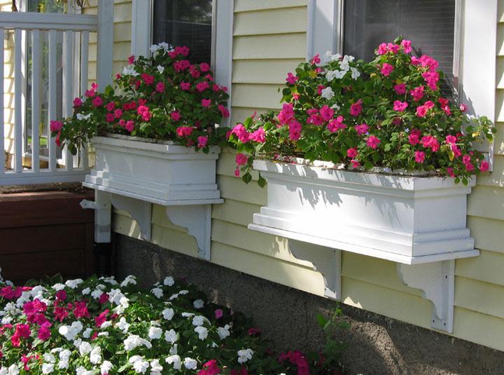 Dr Dan 39 S Garden Tips A Bountiful Box Of Beauty