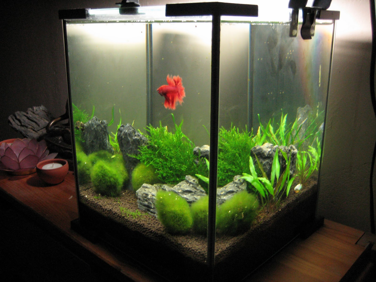 My aquarium scapes 20 liters nano cube for Aquarium boule 20 litres