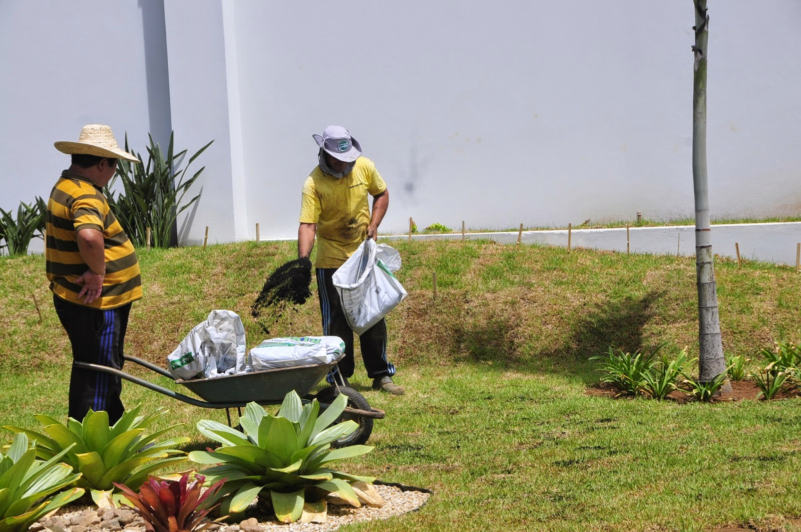 manutenção de jardim; cobertura de gramado