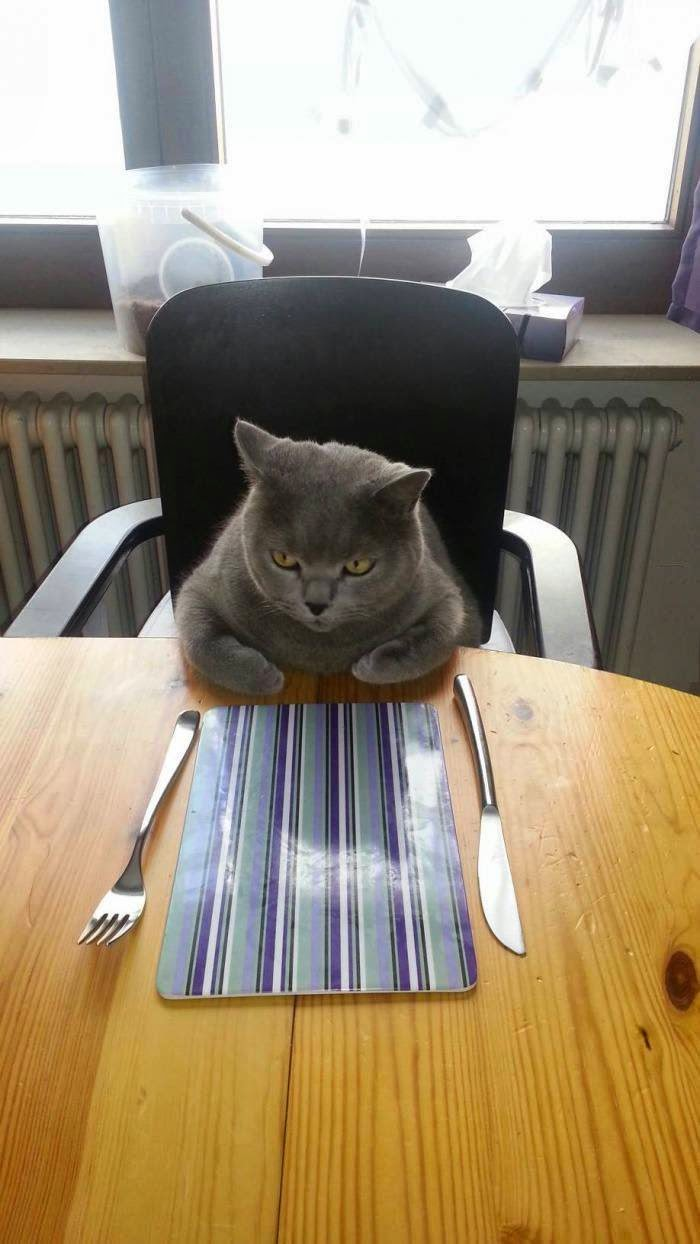 Funny cats - part 94 (40 pics + 10 gifs), cat pictures, cat waiting for his dinner