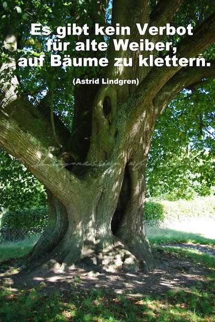 Es gibt kein Verbot für alte Weiber, auf Bäume zu klettern.