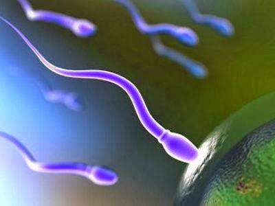 analisa-sperma