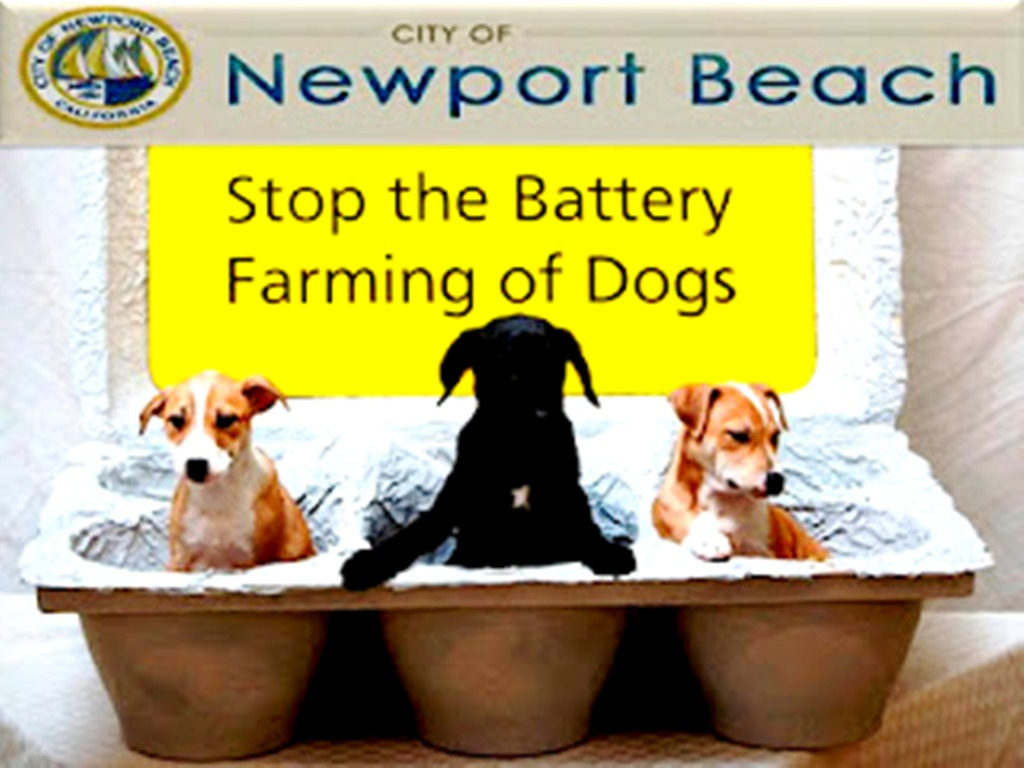Newport Beach City Council Invests in convicted animal cruelty criminal Russos pet experience owne