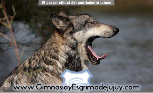 Gimnasia de Jujuy vs Independiente Rivadavia, para el bostezo