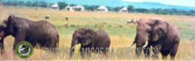 AMIGOS DA GORONGOSA NO FACEBOOK