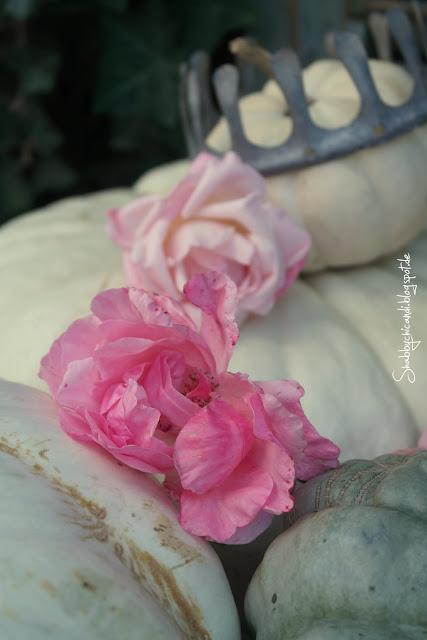 Nahaufnahme rosa Rose im Kürbis