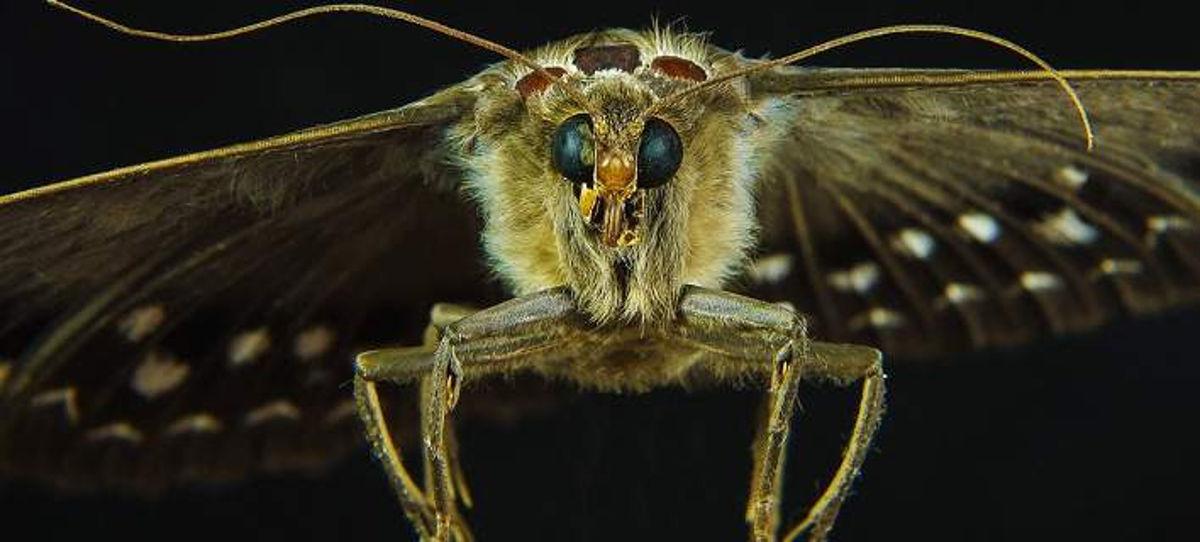 Ανακάλυψαν άγνωστο έντομο στην κοιλάδα των πεταλούδων στην Ρόδο