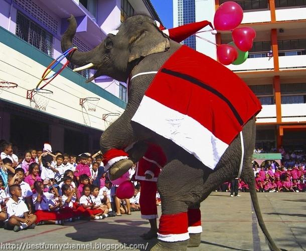 Funny Christmas elephant.