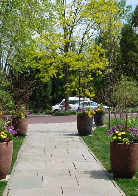 The yellow annuals in these pots seems to draw out the colors of the golden locust tree across the way.